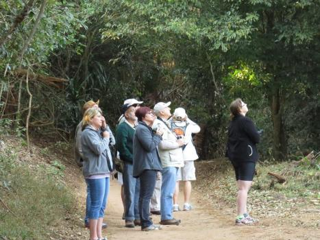 Birders in the forest
