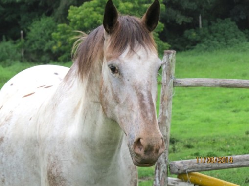 The horse that chased Tima