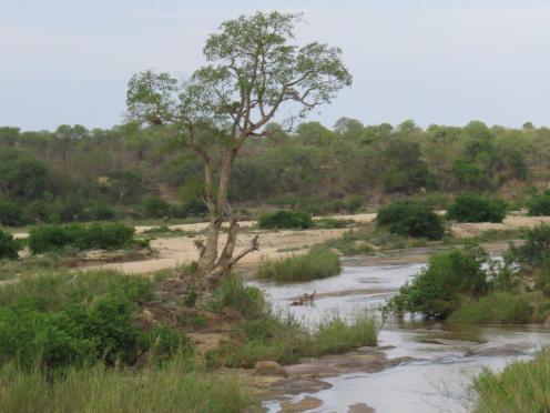 Sabie River view