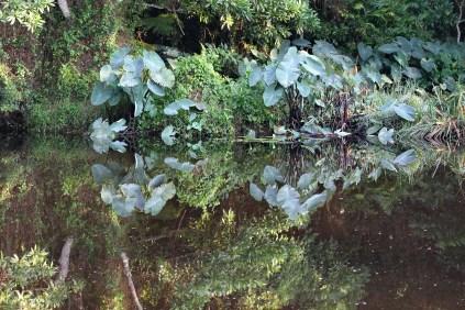 Crocodile Farm Pond
