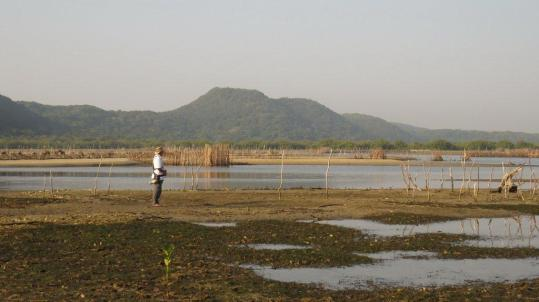 Fish traps inland from the Kosi Bay mouth.