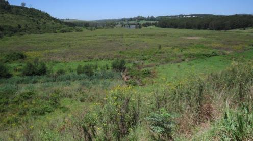 View of wetland area below dam wall.