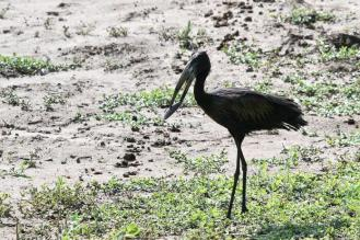 Openbill with lunch