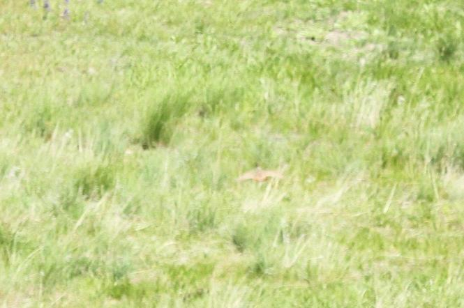 Gray Partridge - lucky shot