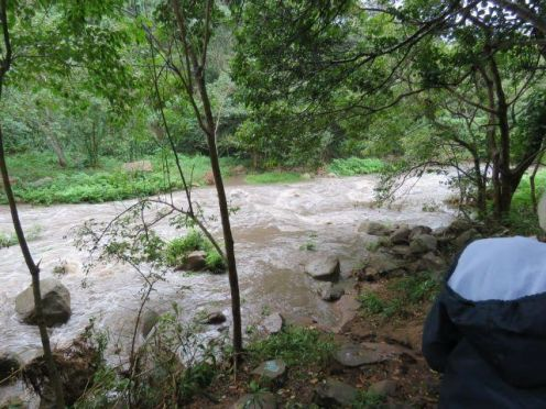 Palmiet River in full flood.