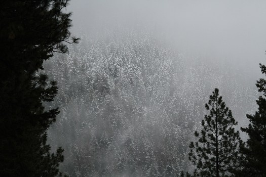 Snowy Trees welcoming our first morning