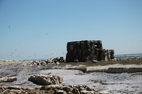 Bird Hide Cape Gannet colony