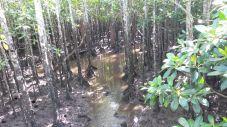 Path through the mangroves