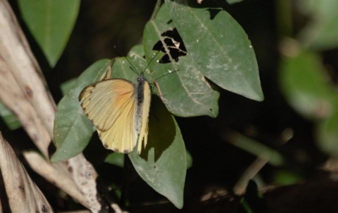 Dotted Border butterfly - John Bremner