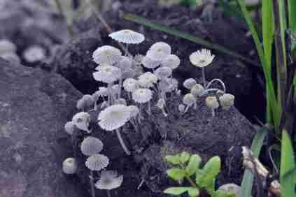 Mushrooms- Hennie Jordaan