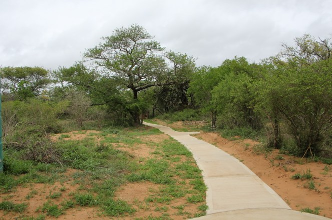 New walkway to the tunnel entrance - similar at other hides. Note path to right goes to where the new loo will be.