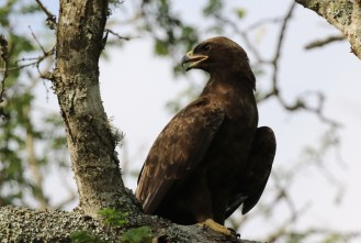 Wahlberg's Eagle, now what