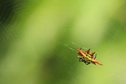 Spider -Elton Bartlett