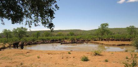 Buffalo Hide when the elephants were elsewhere