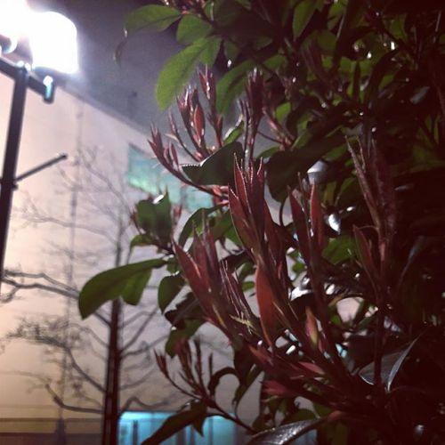 【Instagram】お家までの道すがら。新しい葉っぱがでてきてる笑#スマホ撮影 #スマホで撮影 #スマホ写真ラボ #身近な風景 #身近な景色