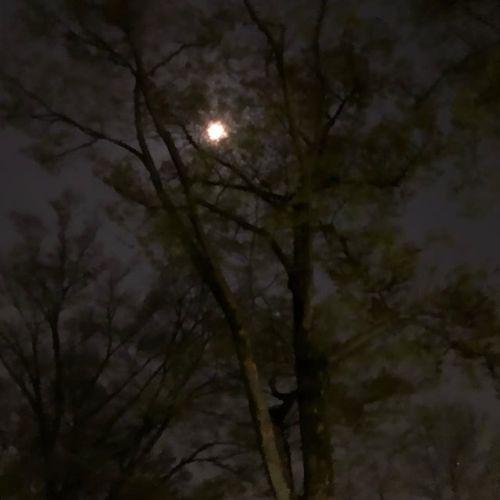 ミスったなぁって思ったら、なんか幻想的?な写真になった。ほんとは、これは桜だとベストだった...