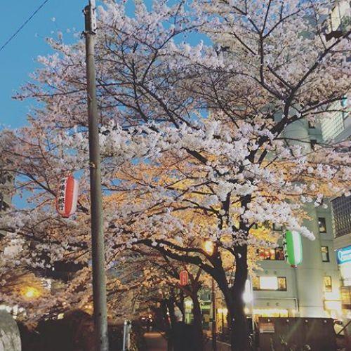 歩きながら撮ったからちょっとアングル微妙なんだけど、夕暮れの桜〜
