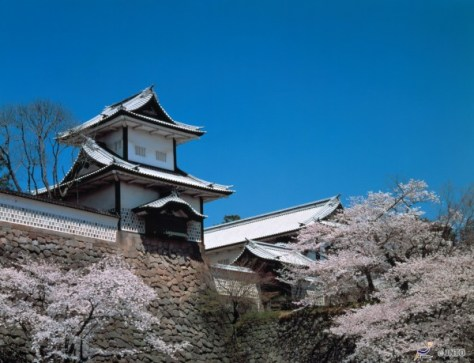 Kanazawa castle is one of the best places to see cherry blossom. (C) JNTO