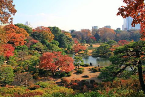 The scene of late fall in Rikugien Gardens (C) 京浜にけ - Bunkyo Rikugien Panoramic View In Late Autumn 1.JPG