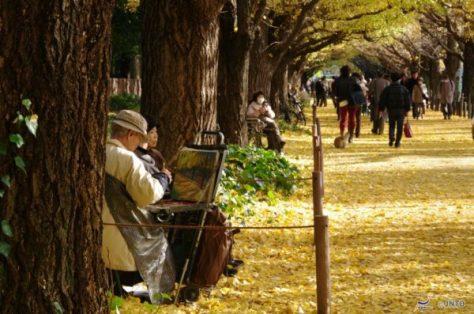 Golden leaves at Meiji Jingu Gaien (C) Yasufumi Nishi /  JNTO