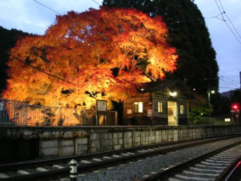 Fall foliage light up at Ninose station of Eizan Railway in Kyoto (C) Nkensei GFDL  or CC-BY-SA-3.0, via Wikimedia Commons