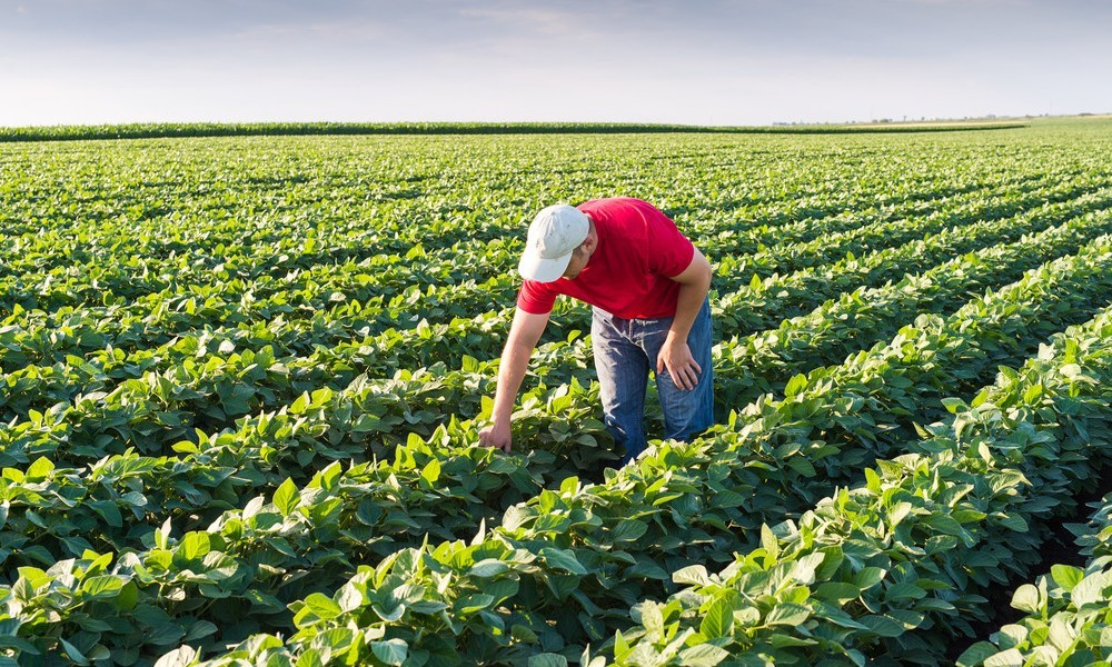 The Benefits Of Sustainable Agriculture For Farmers