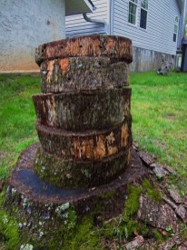 Stacked logs for Chicken of the Wood growth