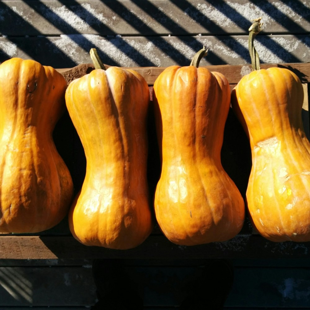 Tahitian Butternut Winter Squash - Edible Asheville article