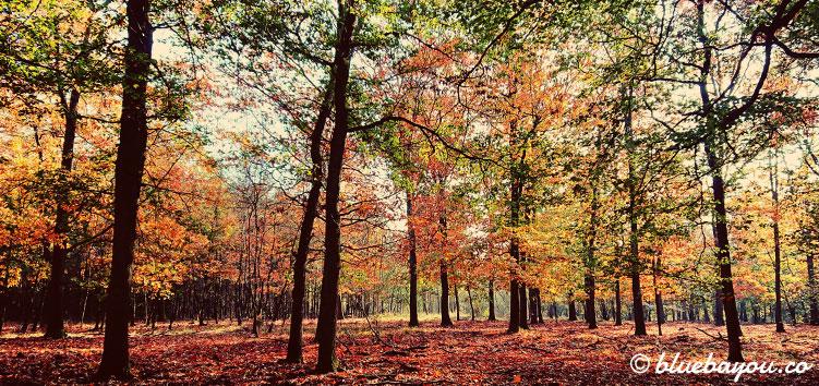 Fotoparade Herbst: Bunter Wald im holländischen Nationalpark De Hoge Veluwe.