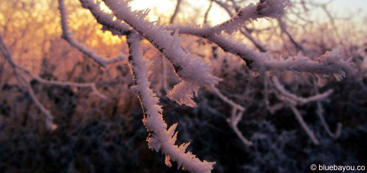 Kategorie Gewachsen: Frost an einem Ast in Luxemburg.
