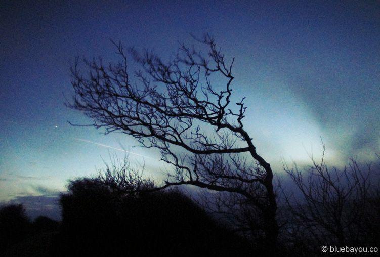 Kategorie Nacht: Ein Baum im Naturschutzgebiet Geltinger Birk bei Nieby an der Ostsee.