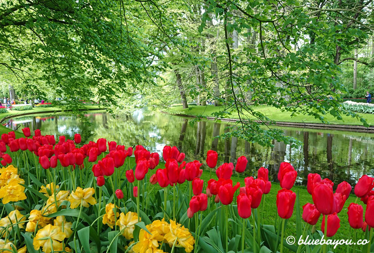 Rote und gelbe Tulpen vor dem Fluss im Keukenhof.