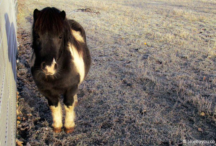 Kategorie Tierisch: Ein kleines Pony an einem Autohof in Bayern.