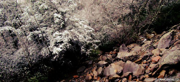Winter im Smoky Mountain National Park in den USA.