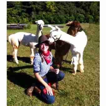 kat with alpacas