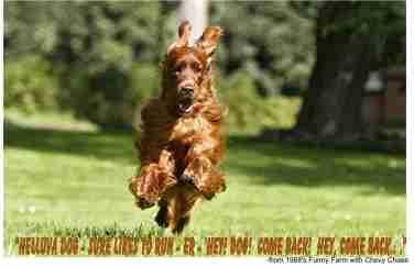 funny farm dog