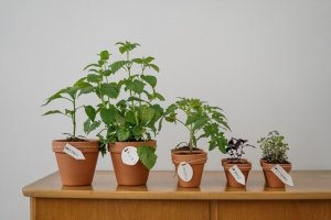 Five pots with house plants