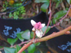 落葉した木に花が咲く