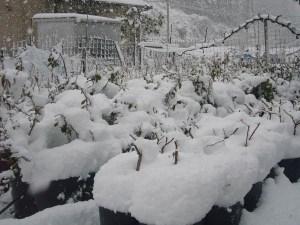 雪をかぶった内儀