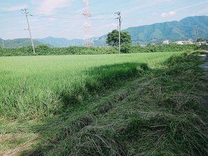 田んぼの畔の草刈り