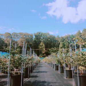秋の農園の様子