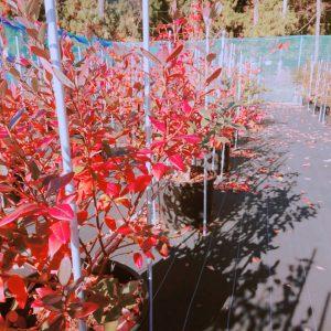 秋のブルーベリーの木
