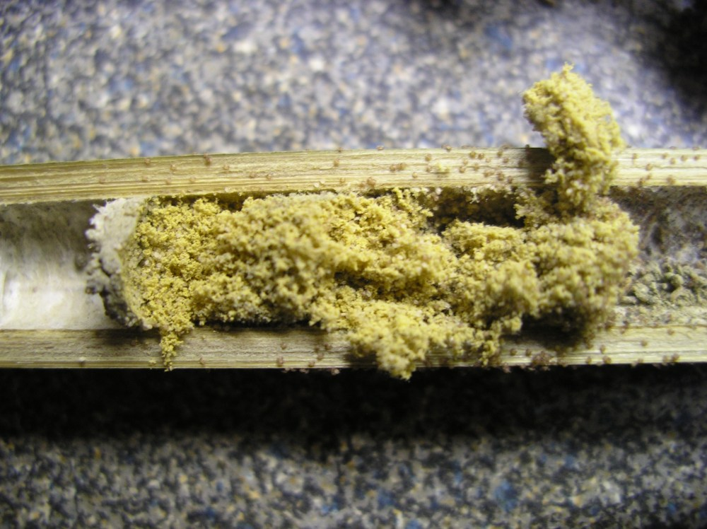 Mason bees and pollen mites (4/4)
