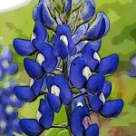 cropped-bluebonnet-4.jpg