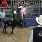 2019dayton FFA rodeo 56