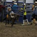 2019dayton FFA rodeo 60