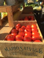farm fresh tomatoes