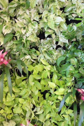 An on-point living wall at Pressed Juicery Whole Foods