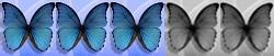 3 Schmetterlinge von 5