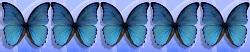 5 von 5 Schmetterlinge